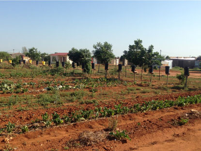 Vastfontein vegetable gardens and small-scale farming units